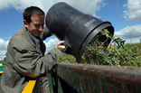 Man emptying bin of green waste into recycling container