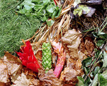 Composting close up - scattered garden waste and grass clippings