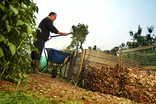 Man composting at allotments