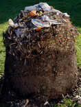 Emptied compost from bin with cardboard and food waste at the top